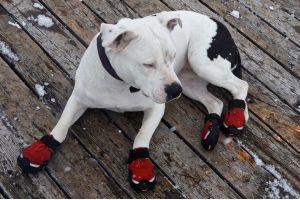 An In Depth Review of the Best Dog Shoes & Boots for Winter of 2018